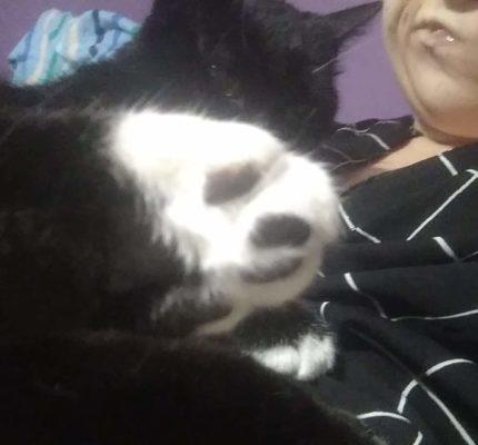 Koci opiekunie który masz oddać swojego kota bo wszystko robisz źle..